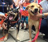 Diputados aprueban bajar multas y penas por maltrato animal