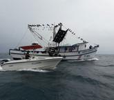 A pesar de críticas, Incopesca defiende nuevas licencias para pesca de arrastre