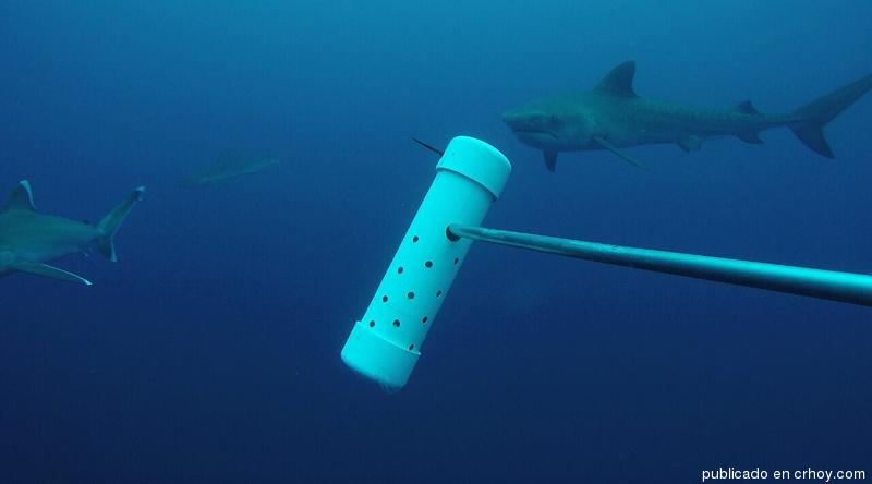 Así se vive en las profundidades de la Isla del Coco