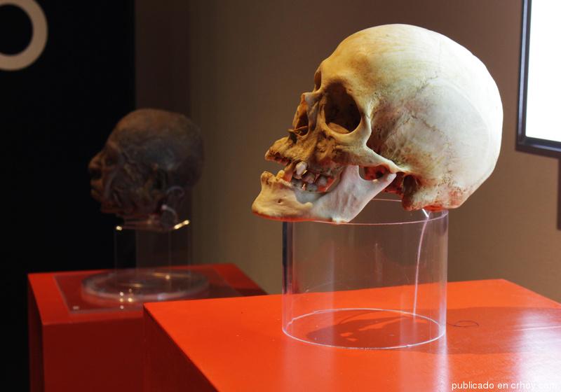 """Exposición """"Yo Humano, All Bodies"""", lo invita a un viaje dentro del ..."""